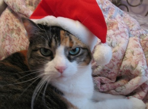 angry cat in Santa hat