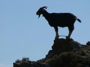 goat silhouette standing on mountain